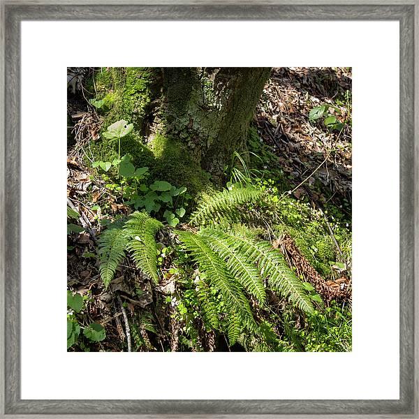 Black Forest Textures Framed Print