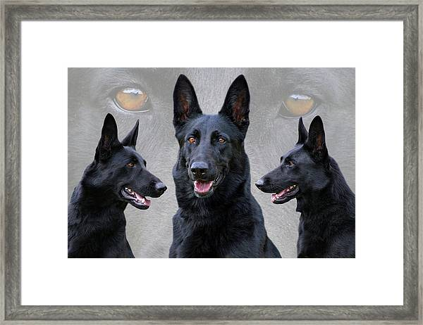 Black German Shepherd Dog Collage Framed Print