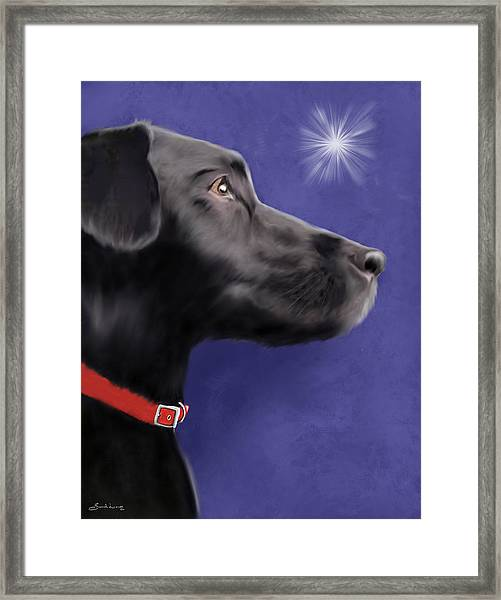 Black Labrador Retriever - Wish Upon A Star  Framed Print
