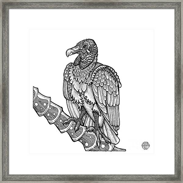 Framed Print featuring the drawing Black Vulture by Amy E Fraser