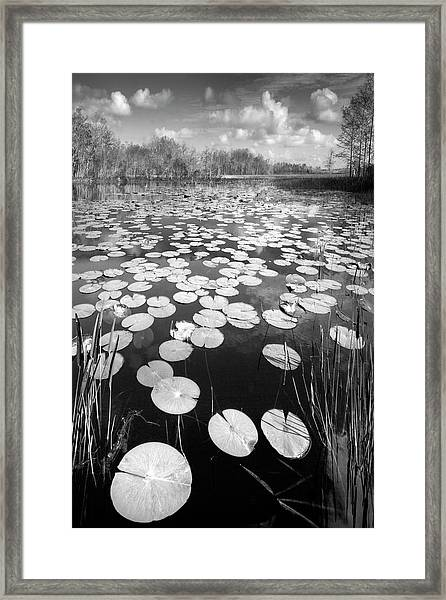 Framed Print featuring the photograph Black Water by Debra and Dave Vanderlaan
