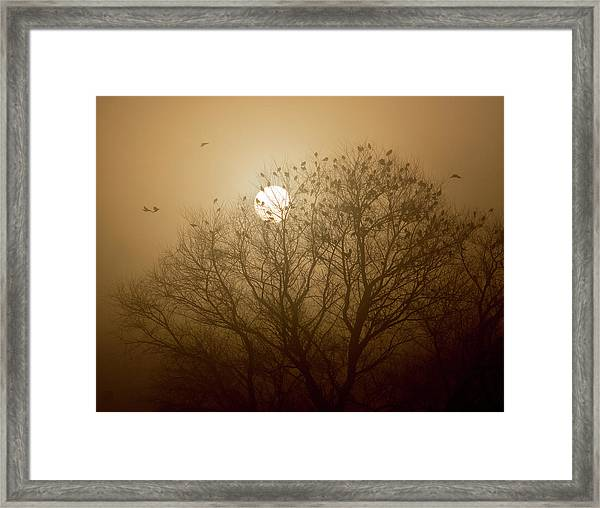 Blackbird Sunrise Framed Print