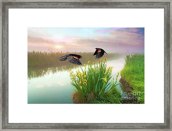 Blackbirds Dance With Iris Framed Print