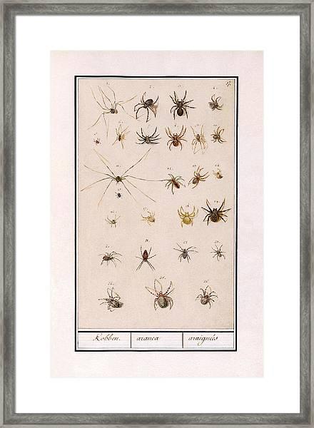 Blad Met Spinnen Framed Print