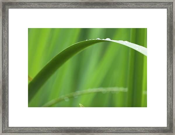 Blades 8594 Framed Print