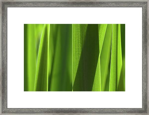 Blades 8851 Framed Print