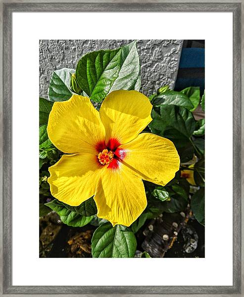 Bloom And Shine Framed Print