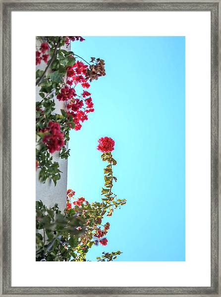 Blooming Beauty Framed Print