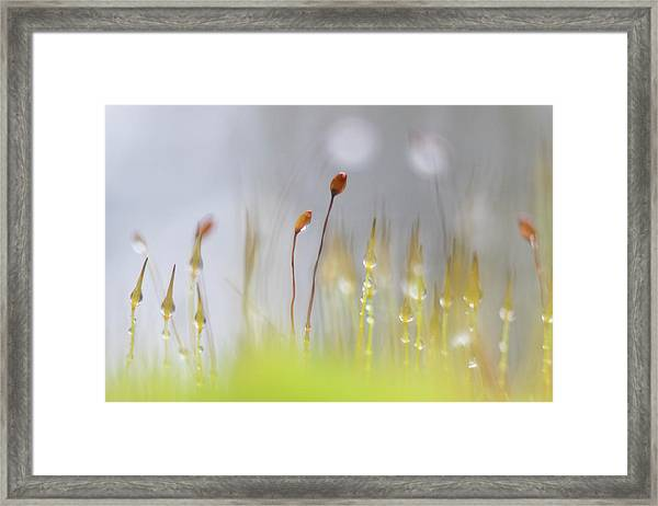 Blooming Moss Framed Print