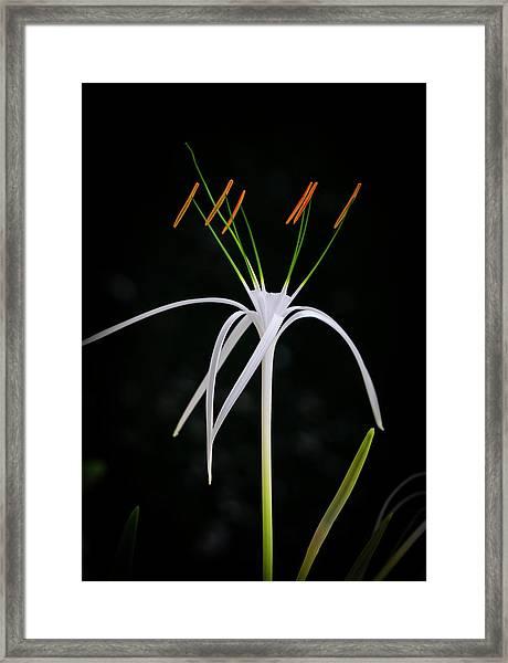 Blooming Poetry 3 Framed Print