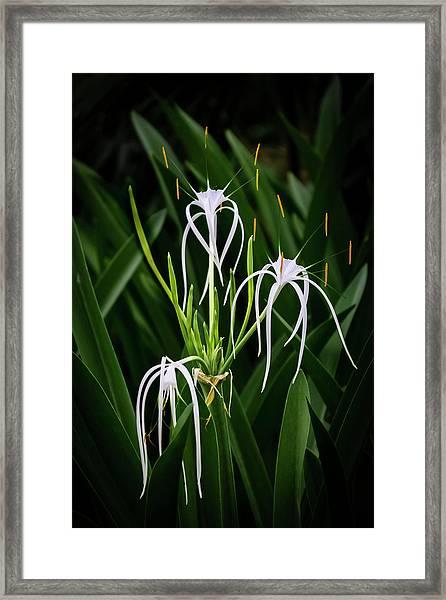Blooming Poetry 4 Framed Print