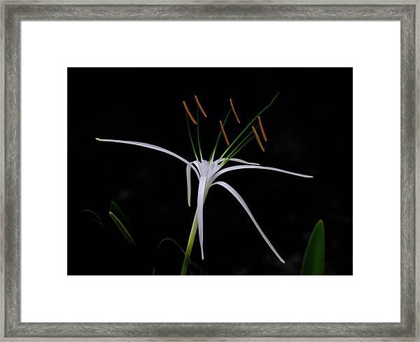 Blooming Poetry Framed Print