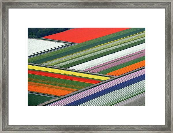 Blooming Tulips Field Framed Print