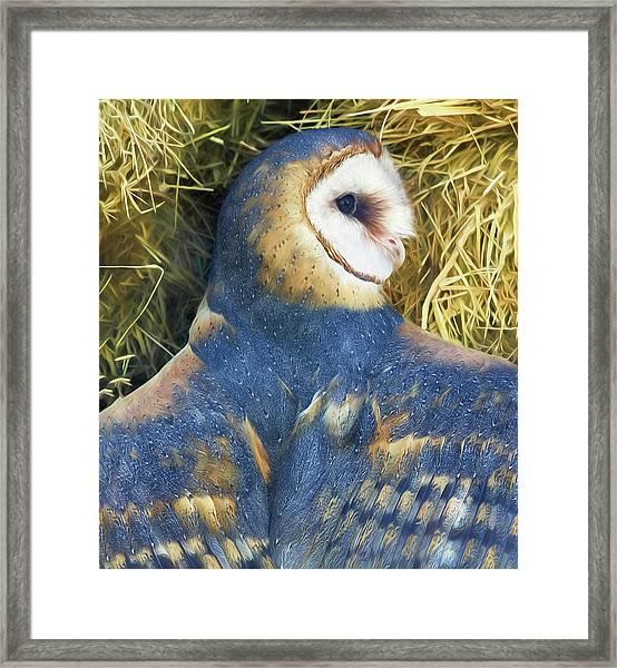 Blue Barn Owl Framed Print