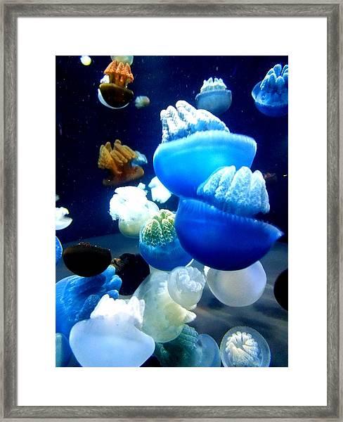 Blue Blubber  Framed Print