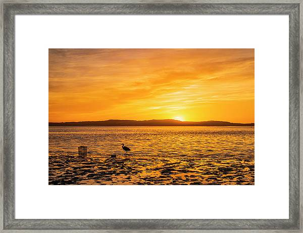 Blue Heron Framed Print by Fernando Margolles