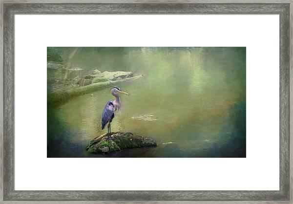 Blue Heron Isolated Framed Print