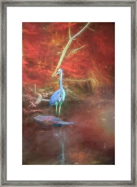 Blue Heron Red Background Framed Print