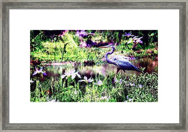 Blue Heron Wetland Magic Landscape Framed Print by Ginette Callaway