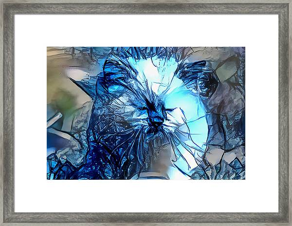 Blue Himmy Cat Framed Print