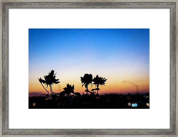 Blue Hour Sunset With Flowers Framed Print