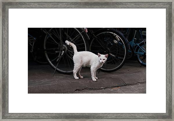 Blue IIi Framed Print
