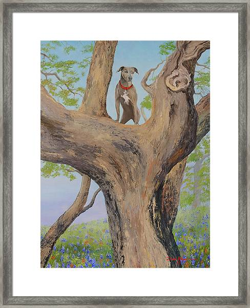 Blue Lacey In A Tree Framed Print