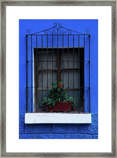 Blue-ming Beauty Framed Print