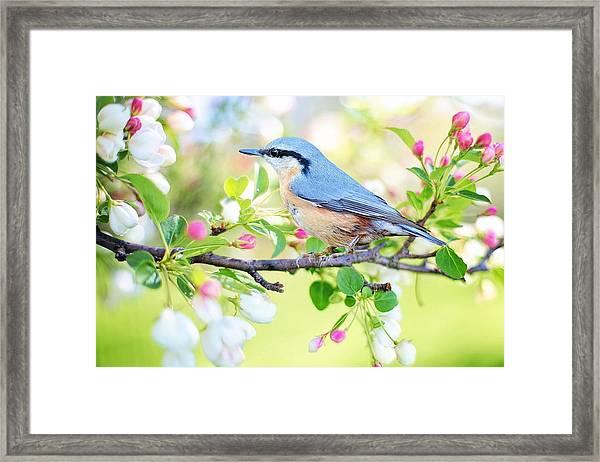 Blue Orange Bird Framed Print