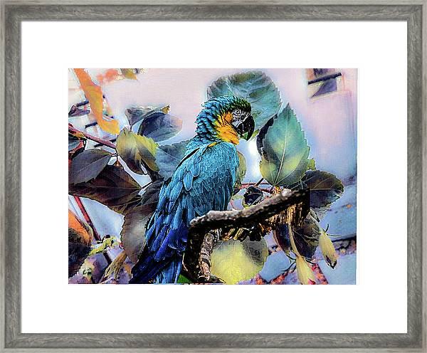 Blue Parrot Framed Print