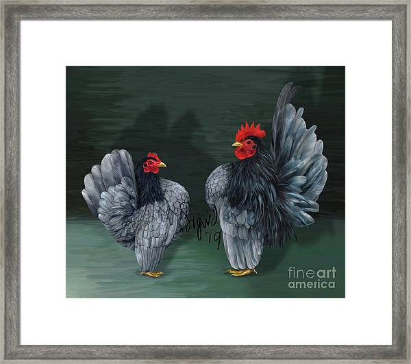 Blue Serama Pair Traditional Style Framed Print