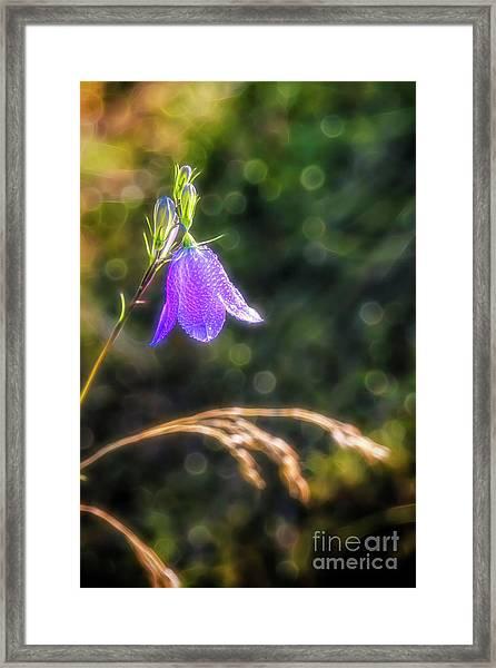 Bluebell 2 Framed Print