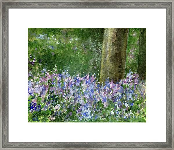 Bluebells Under The Trees Framed Print