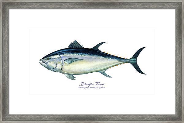 Bluefin Tuna Framed Print