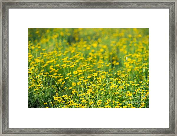 Blur Of Yellow Flowers Framed Print