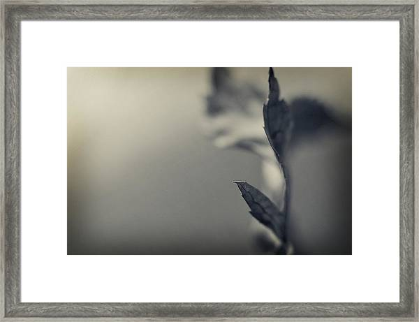 Blurred Lines Framed Print