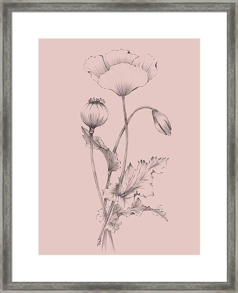 Blush Pink Flower 3 Framed Print