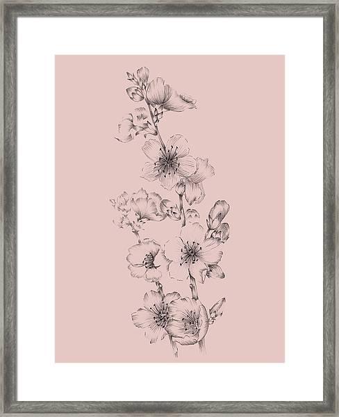 Blush Pink Flower Drawing I Framed Print