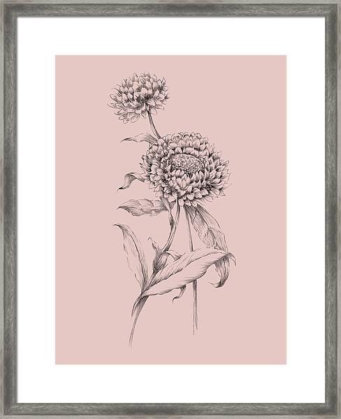 Blush Pink Flower Drawing IIi Framed Print