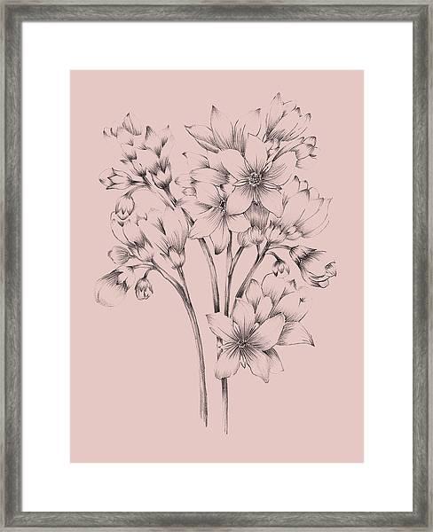 Blush Pink Flower Drawing Framed Print