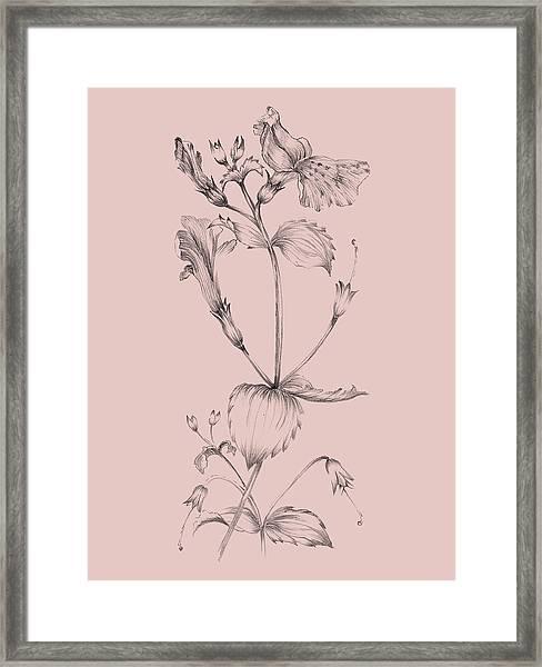 Blush Pink Flower I Framed Print