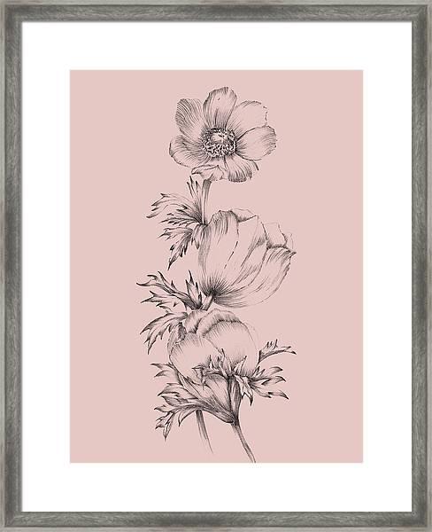 Blush Pink Flower II Framed Print