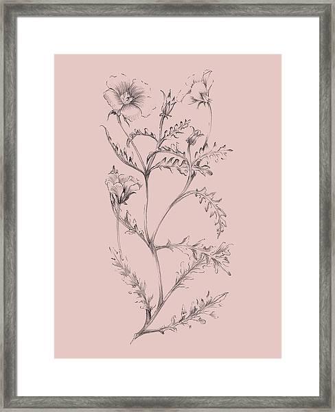 Blush Pink Flower Illustration I Framed Print