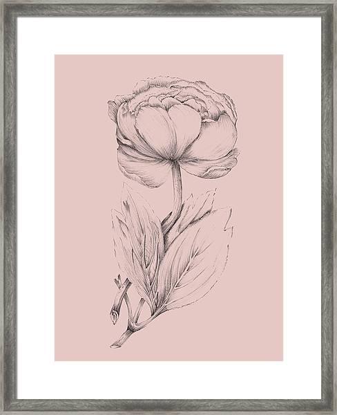 Blush Pink Flower Illustration II Framed Print