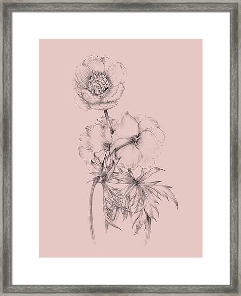 Blush Pink Flower Illustration IIi Framed Print