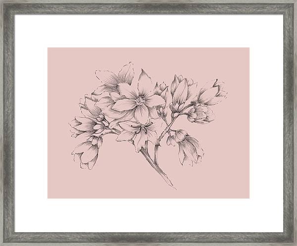 Blush Pink Flower Illustration Framed Print