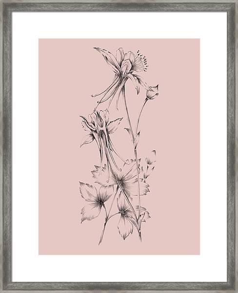 Blush Pink Flower  Framed Print