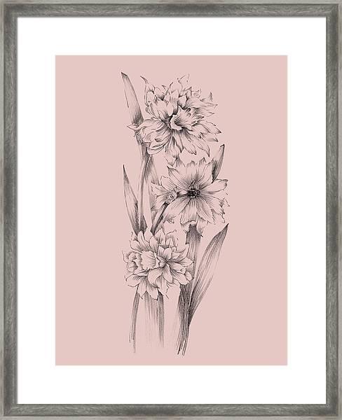 Blush Pink Flower Sketch 3 Framed Print