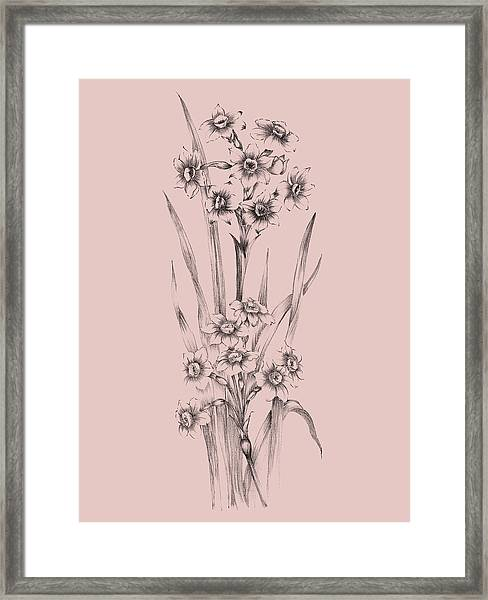 Blush Pink Flower Sketch I Framed Print