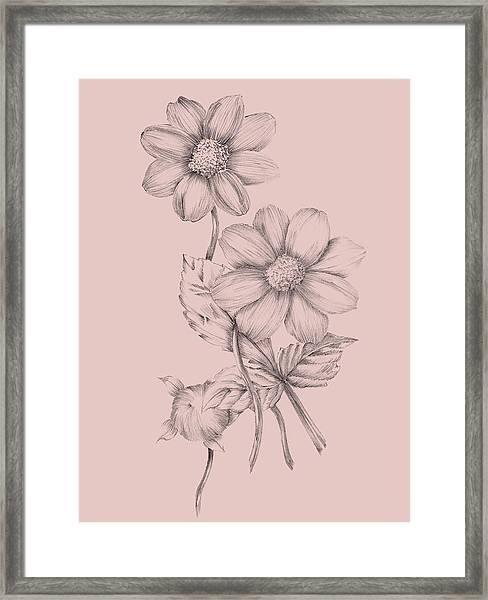 Blush Pink Flower Sketch Framed Print